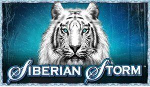 Siberian-Storm-300x175 (1)